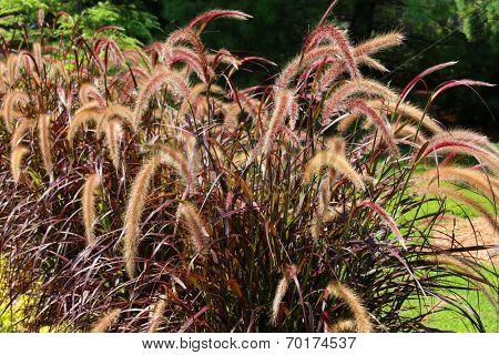 Long prairie grass