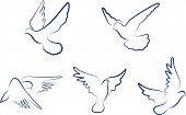 Set of doves symbols for design and decorate poster