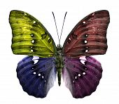 Close up of multi color butterfly in fancy color Isolated on White Background poster