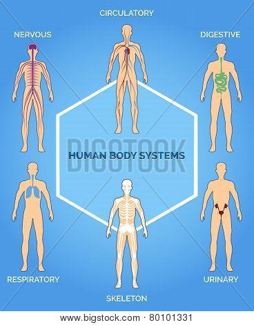 Vector human body systems illustration