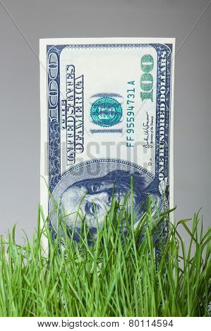 dollar bills growing in the green grass