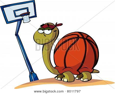 basket turtle
