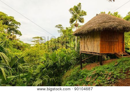 Lodge In The Middle Of The Amazonian Jungle, Yasuni Wildlife Reserve
