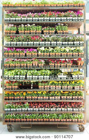 Shelves Full Of Potted Seedlings In A Nursery