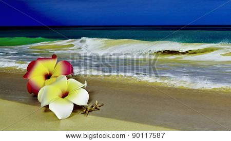 Pink And White Plumeria On The Beach With Starfish
