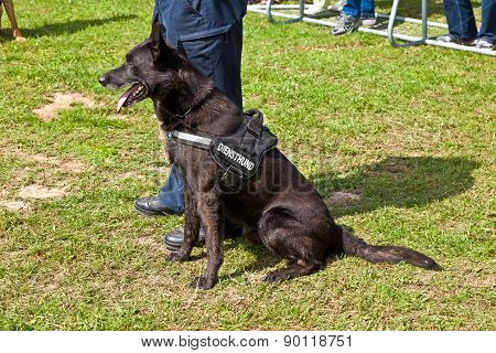 Police Dogs Show Their Discipline At The Hessentag