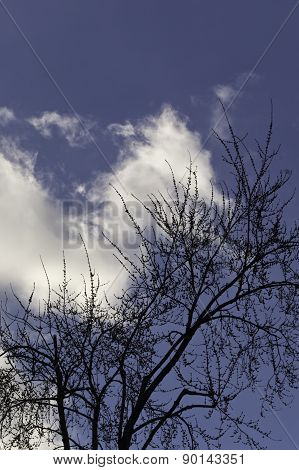 Tree, Sky And Cloud