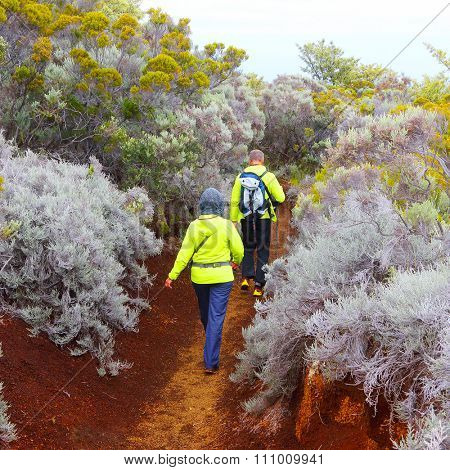 Hikers walking in mountain forest on Piton de la Fournaise (Peak of the Furnace) 2632m. Reunion island, France.