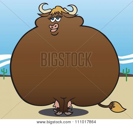 Overweight Cow