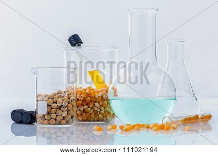 Dangerous Food From  Laboratory Agricultural Grains And Corn With Laboratory Tools Isolated On White