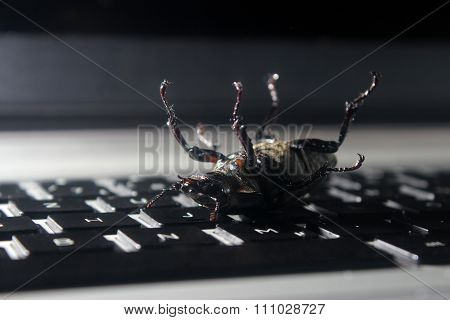 Dead bug on laptop keyboard. Symbol of antivirus, debugging, software optimization