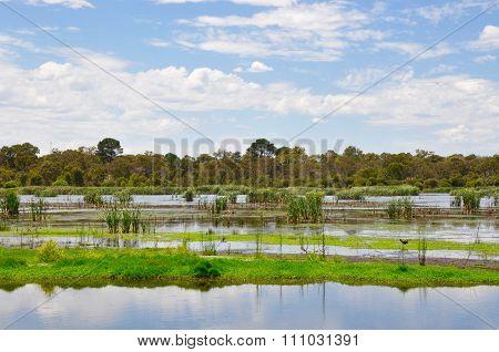Beelier Wetlands: Wildlife Reserve