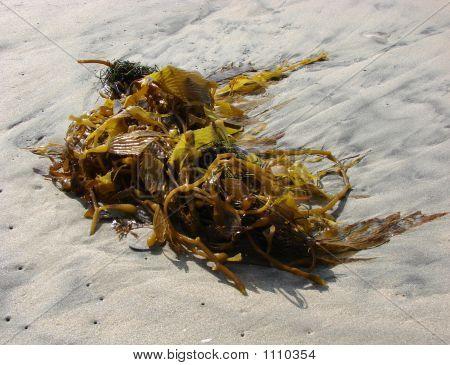 Kelp On The Beach