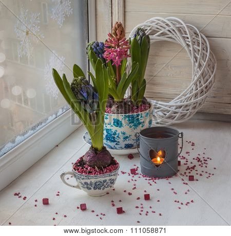 Winter Window With Hyacinths In Vintage Pots
