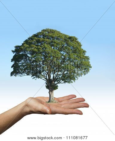 Our Trees are the Lungs of Our Earth