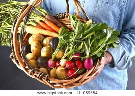 Closeup of a farmer holding a basket filled with fresh picked local grown organic vegetables. Carrots, potatoes, and radishes.