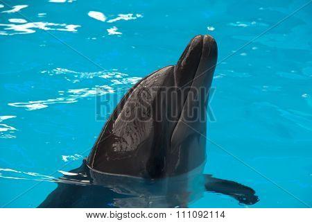 Dolphin Close Up