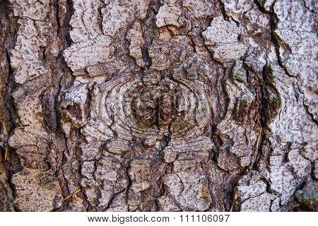 Tree Peel