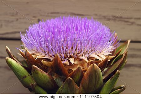 Flower Artichoke - Cynara Kardunkulus