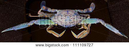 Abstract Art Blue Crab