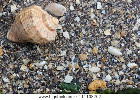 Shell in the sand