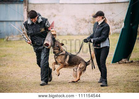 German shepherd dog training in Gomel Regional sports club and d