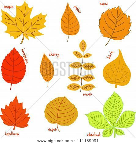 Autumn leaves with their names on a white background