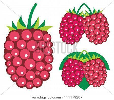 Raspberries Vector Illustrations