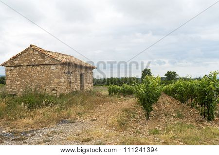 Vineyard In Languedoc-roussillon (france)