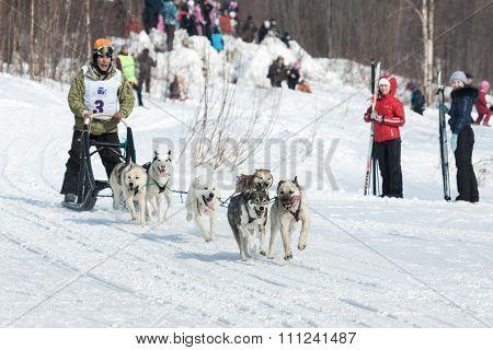 Musher Runs Dogsled On Snowy Track