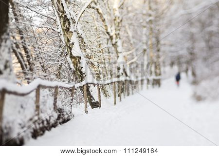 Hiking In A Forest With Snow