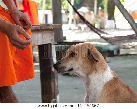Faithful Dog , A Faithful Friend And Slave Owners,