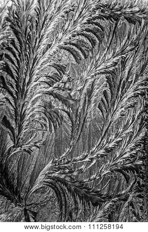 Pattern made by frost on glass.
