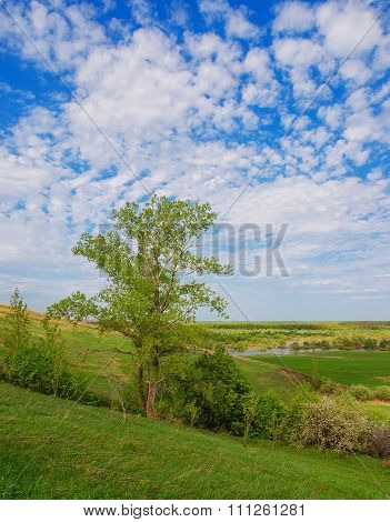The Tree And The Field On A Sunny Summer Day. Voroninsky National Park, Tambov Oblast, Russia.