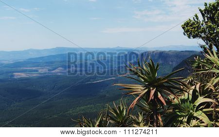 aloe bush on the background of a mountain valley