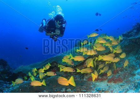 Scuba diver explores coral reef with sea fish underwater in ocean
