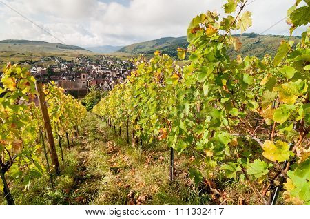 Riquewihr vineyards