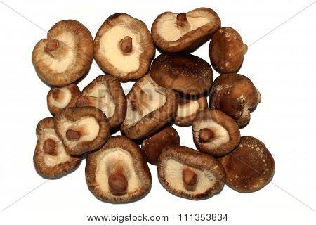 The shiitake mushrooms- Lentinula epodes