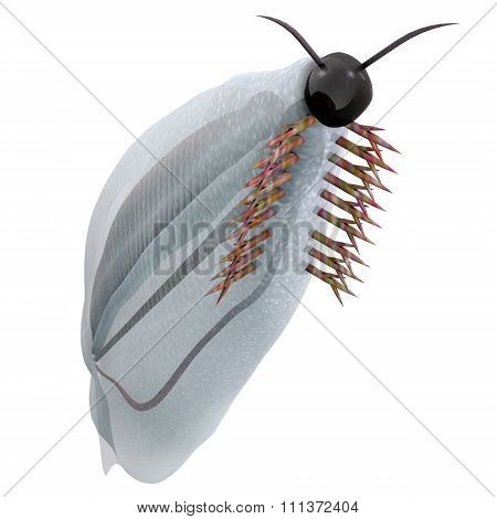 Cambrian Pikaia