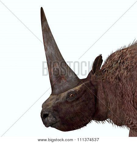 Elasmotherium Head