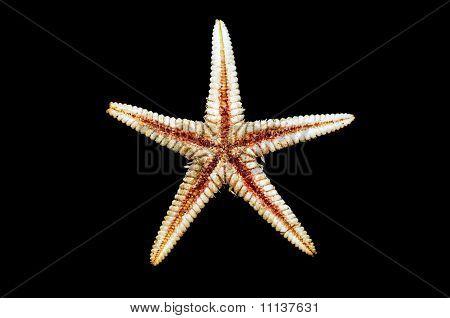Sea-star Endoskeleton
