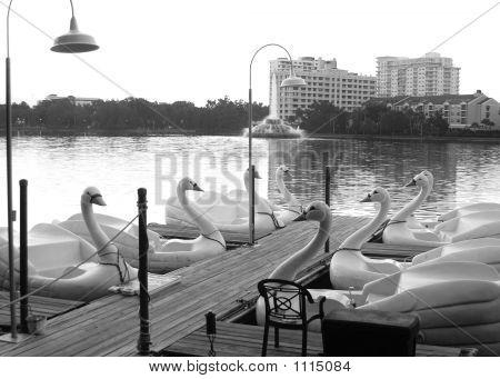 Swan Dock 2
