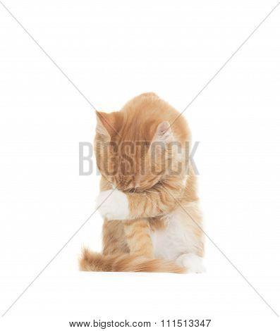 Cat Embarrassed