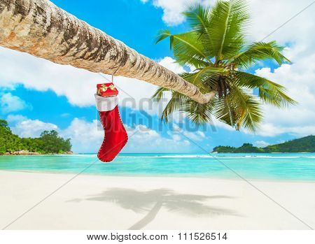 Christmas Sock With Gifts On Palm Tree At Exotic Beach