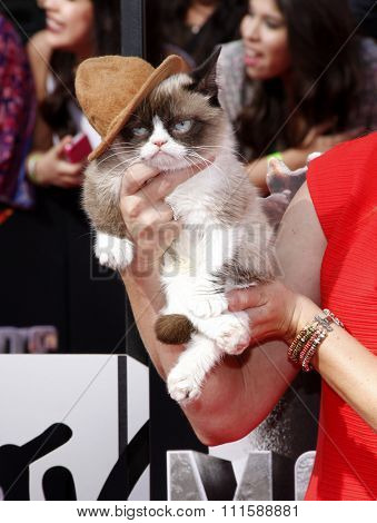 LOS ANGELES, CA - APRIL 13, 2014: Grumpy Cat at the 2014 MTV Movie Awards held at the Nokia Theatre L.A. Live in Los Angeles, USA on April 13, 2014.
