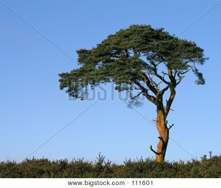Lone tree on Priddy Moor in England poster