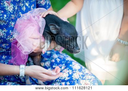mini pig pet with  girls