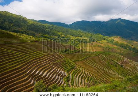 Mountain Of Rice Terraces Dragons Backbone