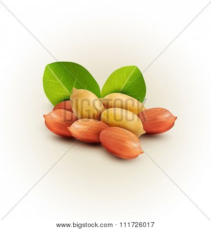 peanut kernels isolated with green leaves (design element)
