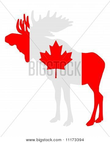 Detailed and colorful illustration of mosse in flag of canada poster